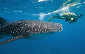 Scuba diving and snorkeling in Latin America