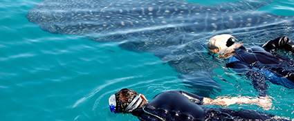 Whale Sharks and Ancient Ruins