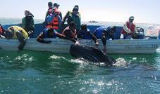 whale mexico