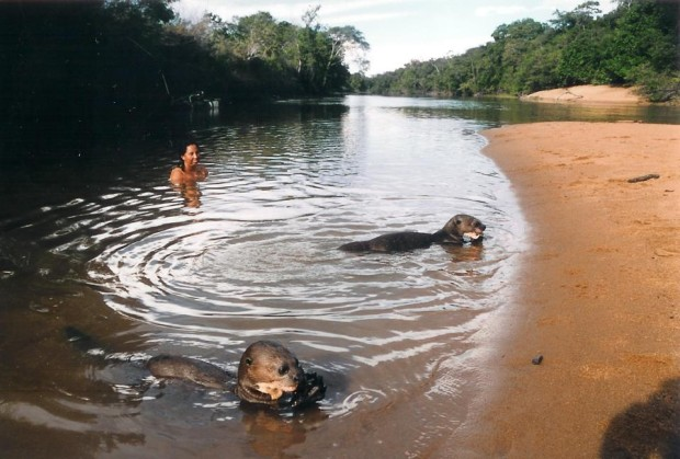 Guyana – Last Refuge of the Giant River Otter
