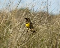 Birding in Uruguay