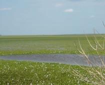 Los Llanos