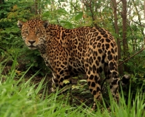 Pantanal – Wetlands