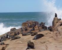 Rocha Marine Wildlife