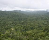 Chiquibal Reserve